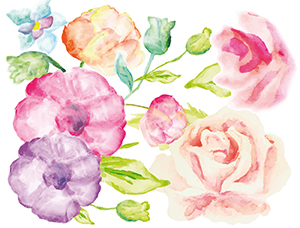 watercolor roses cover